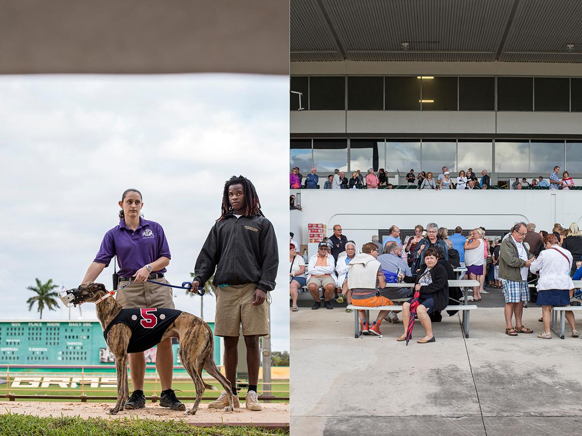 33_Greyhound racing demonstrator and audience