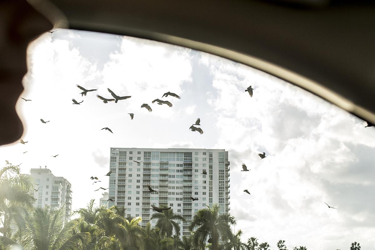 00_Florida drive