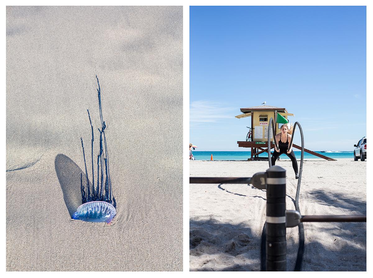 03_Miami-Jellifish