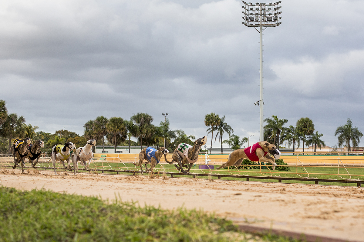 Miami Greyhound Racing - Mardi Gras Casino, Florida State, USA.
