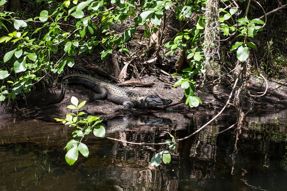 Tampa Bridge - St Petersburg Clear Water - Hillsborough National Parc, Florida State, USA.