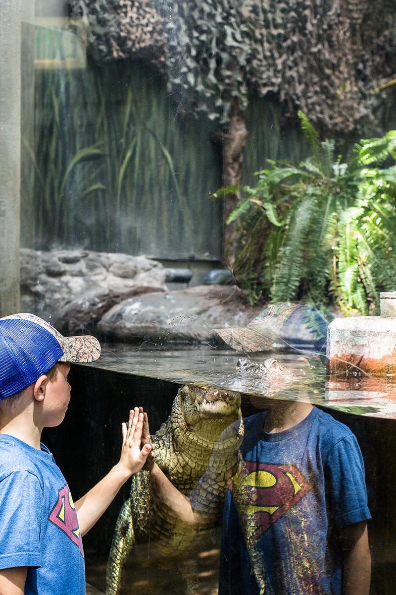 Explore and learn about marine life at The Florida Aquarium. Our Tampa aquarium is perfect for all ages. Florida Aquarium in Tampa, Florida. Founded in March 1995.
