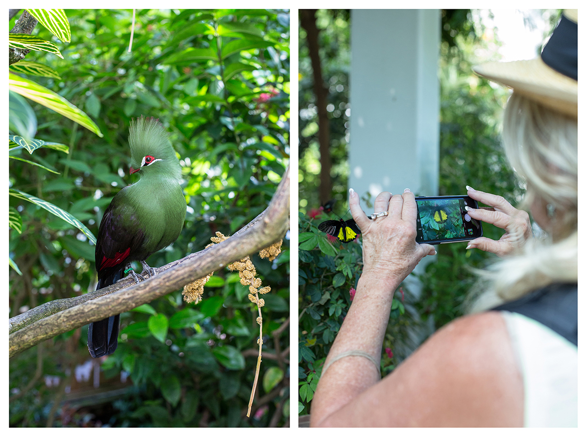 21_Butterfly and Nature Conservatory-Turaco